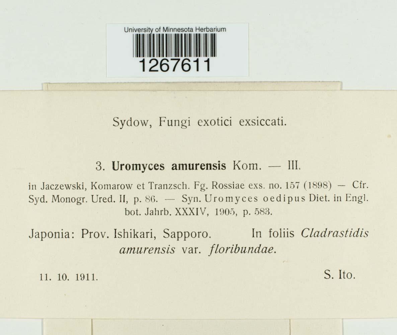 Uromyces amurensis image