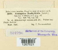 Uromyces anthyllidis image