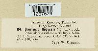 Uromyces hedysari image