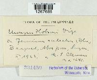 Uromyces hobsoni image