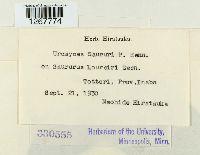 Uromyces saururi image