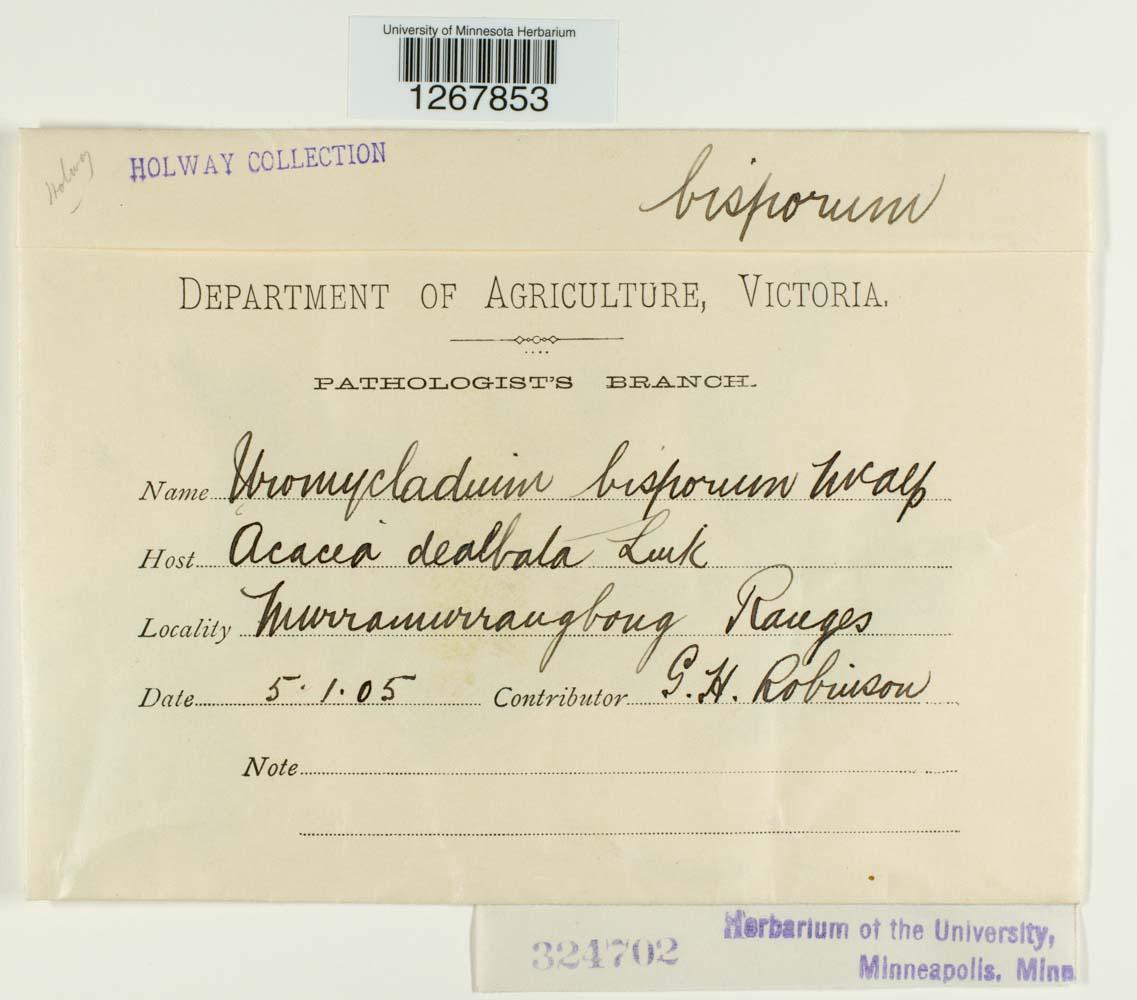 Uromycladium bisporum image