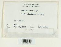 Uropyxis holwayi image