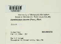 Hemitrichia clavata image