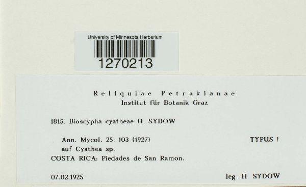 Bioscypha cyatheae image