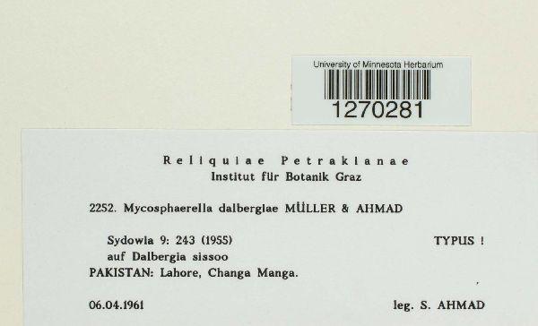 Mycosphaerella dalbergiae image