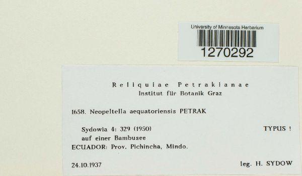 Neopeltella aequatoriensis image