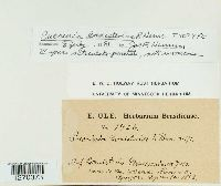 Image of Puccinia banisteriae