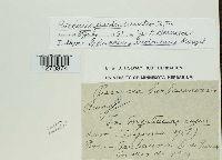 Image of Puccinia barbacensis