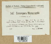 Image of Cercospora rhynacanthi