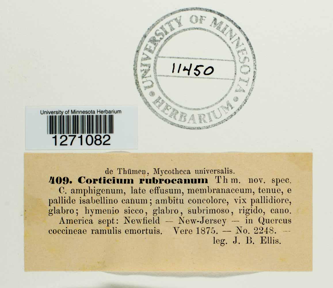 Corticium rubrocanum image