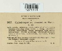 Phloeospora crescentium image
