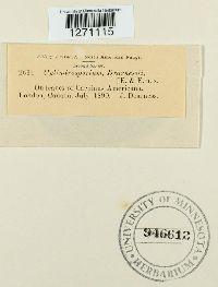 Cylindrosporium dearnessii image