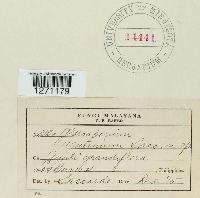 Image of Gloeosporium agatinum