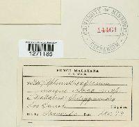 Image of Helminthosporium insigne