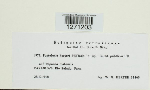 Pestalotia herteri image