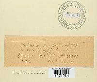 Image of Puccinia acanthi