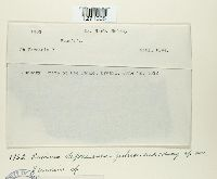 Image of Puccinia deprecanea