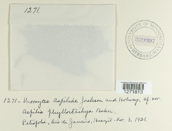 Uromyces aspiliae image