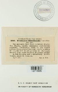 Uromyces dietelianus image
