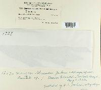 Uromyces tolerandus image