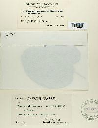 Uromyces vicinus image