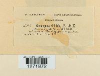 Cercospora viridula image