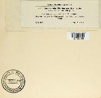 Cercosporella filicis-feminae image