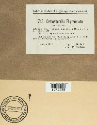 Cercosporella phyteumatis image