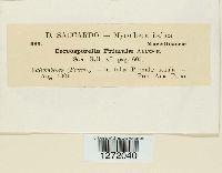 Cercosporella primulae image