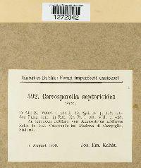 Cercosporella septorioides image