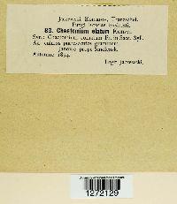 Chaetomium elatum image