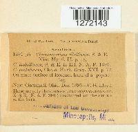 Inonotus andersonii image