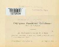 Cladosporium subsessile image