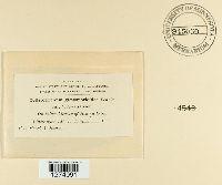 Glomerella cingulata image