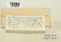 Colpoma quercinum image