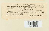 Athelia arachnoidea image