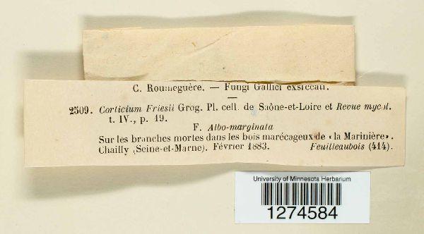 Corticium friesii image