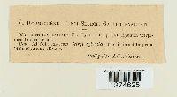 Phanerochaete tuberculata image