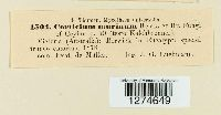 Corticium murinum image