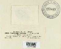 Corticium roseum image