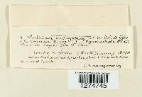 Corticium variegatum image
