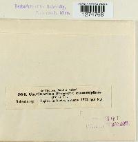 Cortinarius eumorphus image