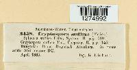 Cryptosporella suffusa image