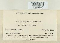 Cylindrosporium acori image