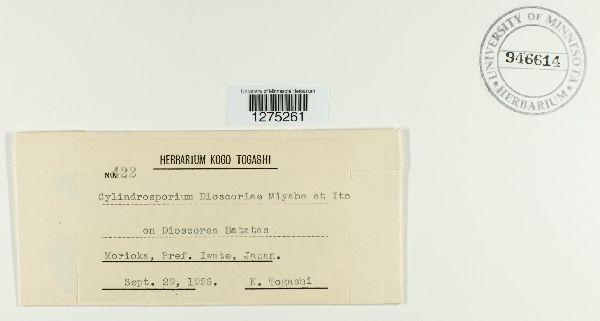 Pseudophloeosporella dioscoreae image