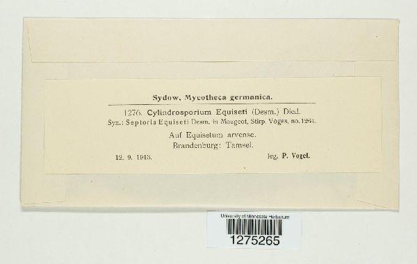 Cylindrosporium exiguum image