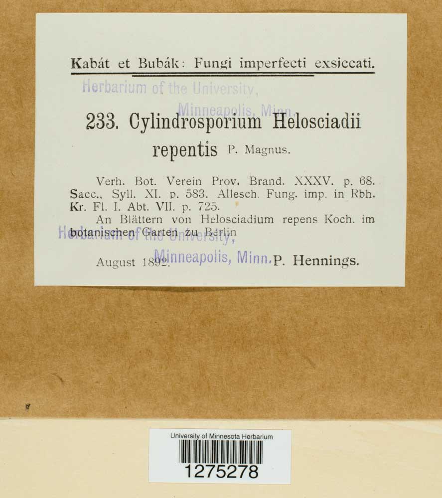 Cylindrosporium helioscladii-repentis image