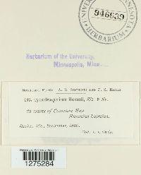 Cylindrosporium humuli image