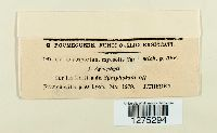 Entyloma fergussonii image
